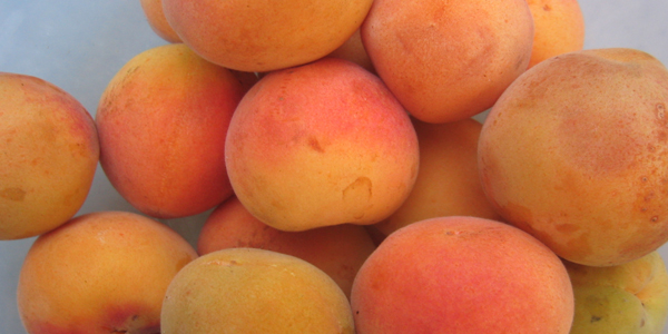apricots-for-eye-health
